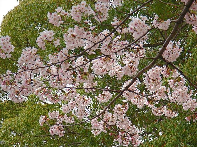 2006-Spring010.jpg