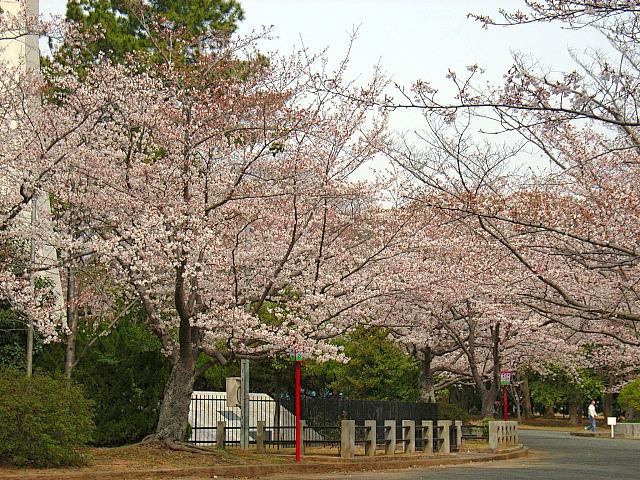 2006-Spring012.jpg