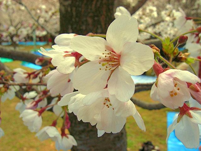 2006-Spring014.jpg