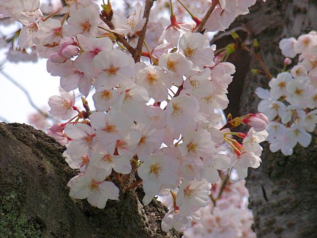2006-Spring021.jpg
