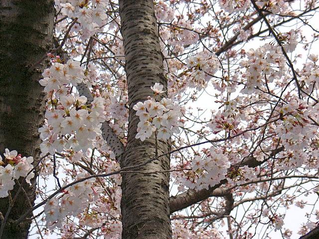 2006-Spring022.jpg
