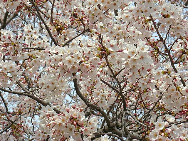 2006-Spring023.jpg
