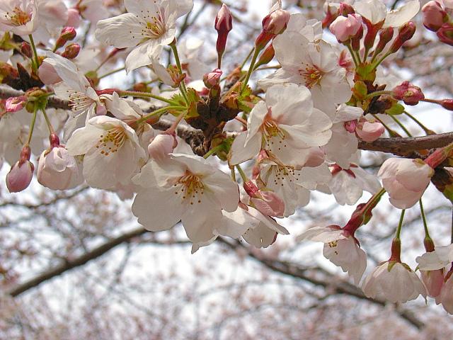 2006-Spring024.jpg