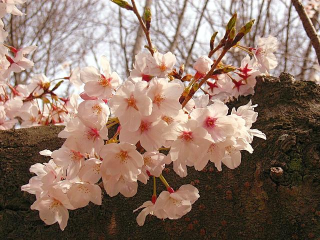 2006-Spring025.jpg