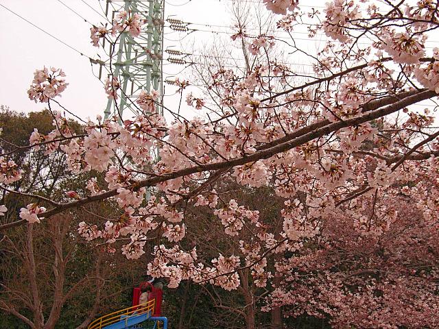 2006-Spring026.jpg