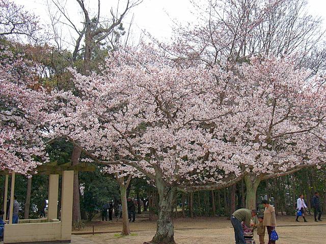 2006-Spring027.jpg