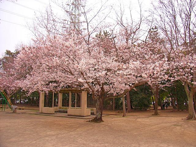 2006-Spring028.jpg
