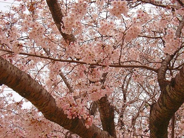 2006-Spring029.jpg