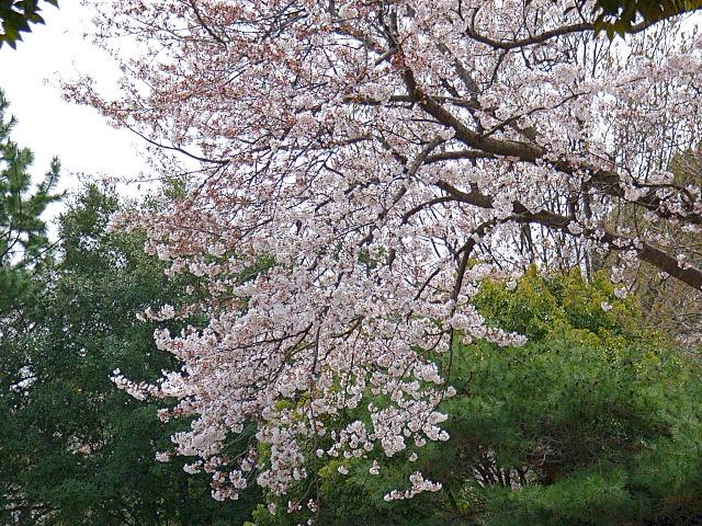2006-Spring030.jpg