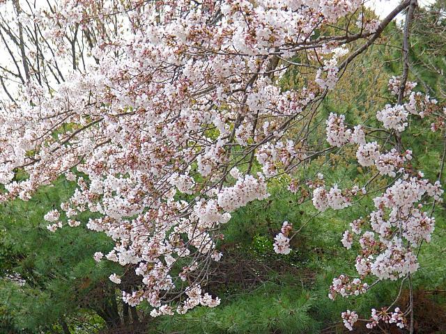 2006-Spring031.jpg
