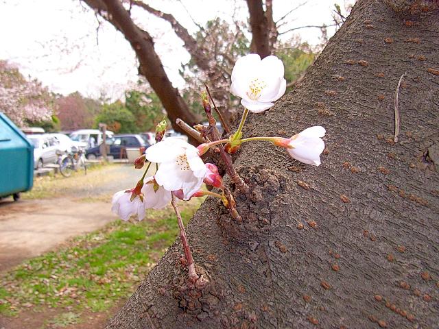 2006-Spring032.jpg