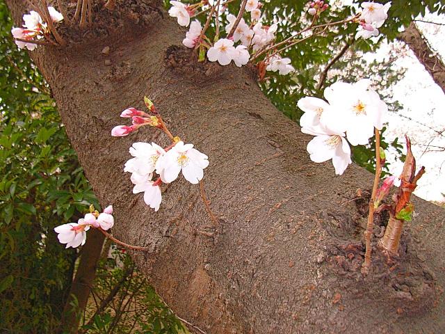 2006-Spring033.jpg