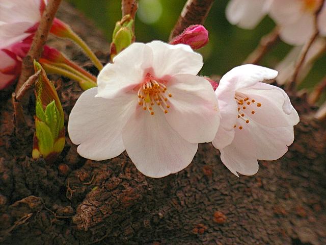 2006-Spring034.jpg