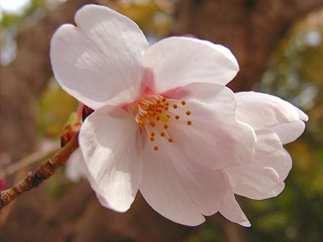 2006-Spring035.jpg