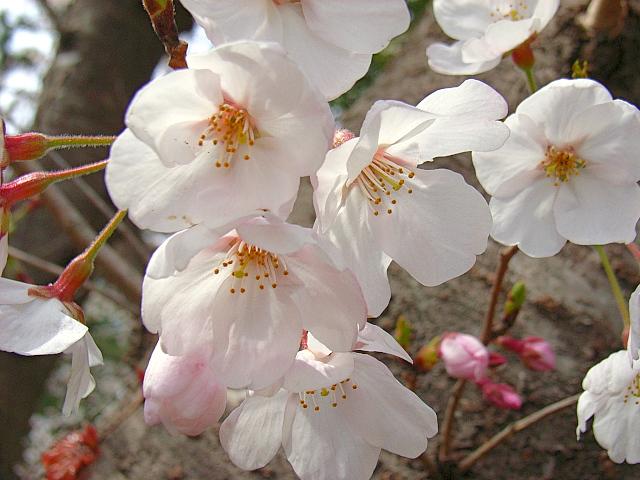 2006-Spring036.jpg