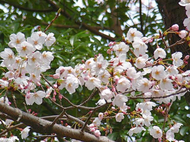 2006-Spring037.jpg