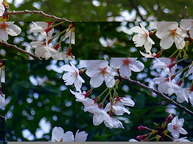 2006-Spring038.jpg