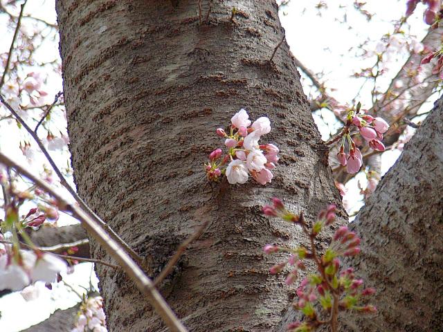 2006-Spring039.jpg