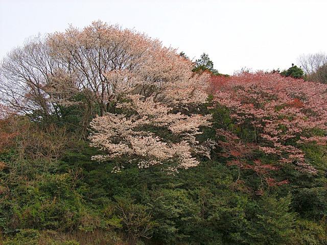 2006-Spring040.jpg