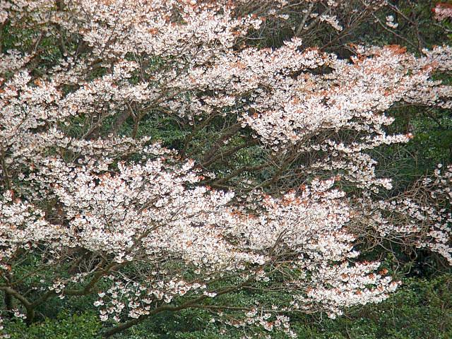 2006-Spring041.jpg
