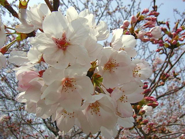 2006-Spring044.jpg