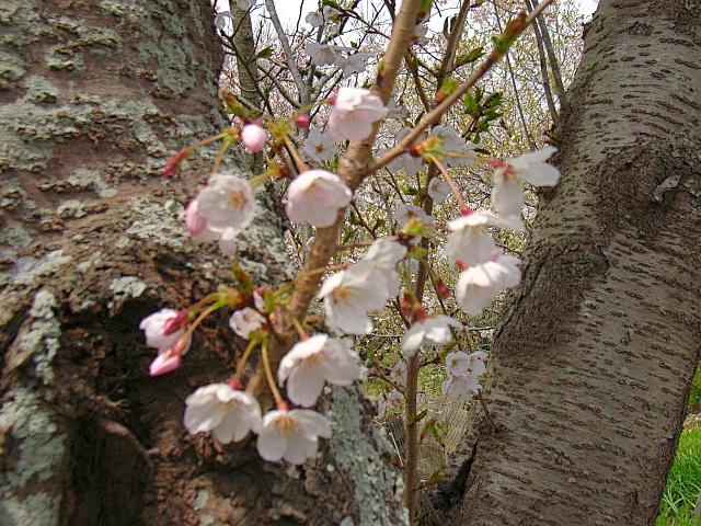 2006-Spring046.jpg