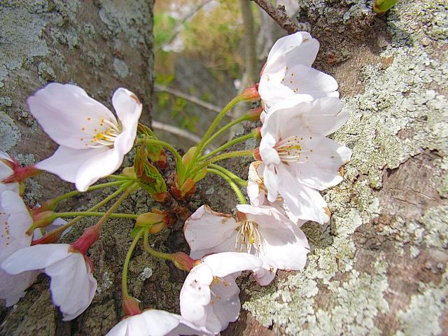 2006-Spring047.jpg