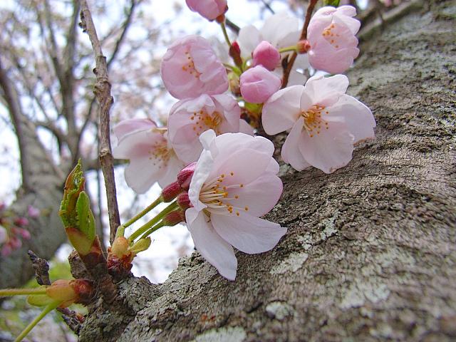 2006-Spring048.jpg