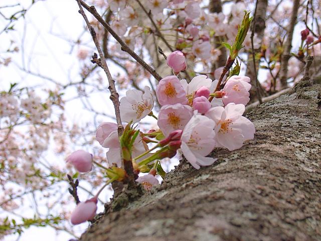 2006-Spring049.jpg