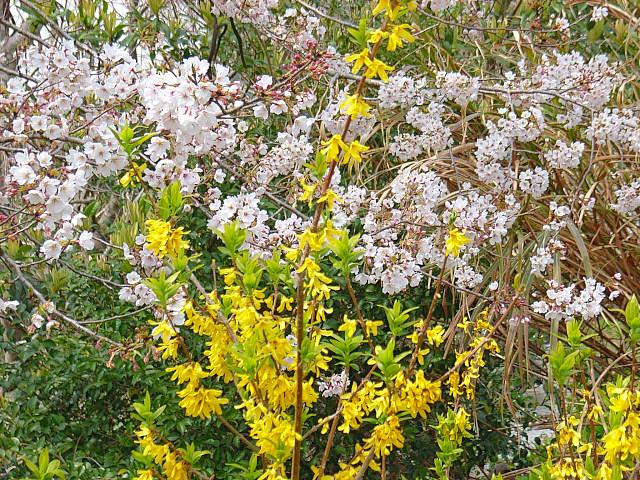 2006-Spring051.jpg