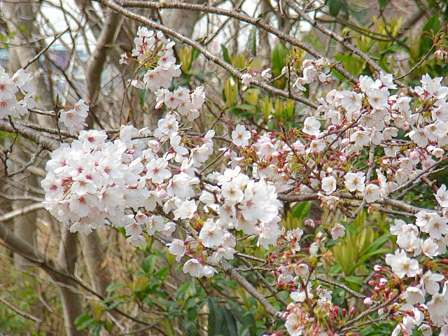 2006-Spring052.jpg