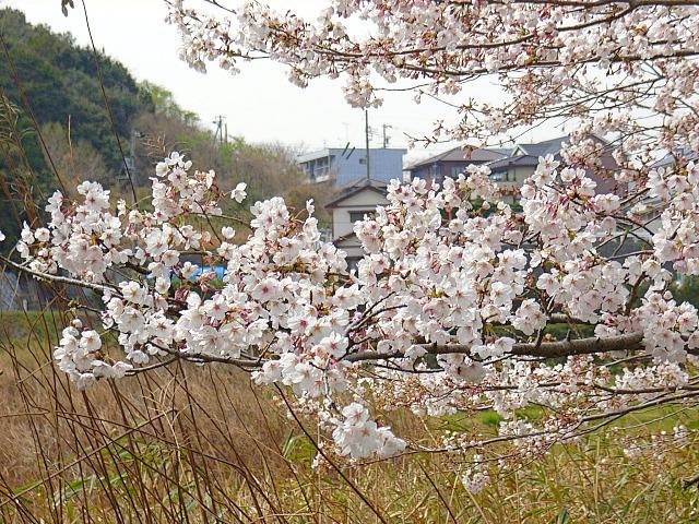 2006-Spring053.jpg