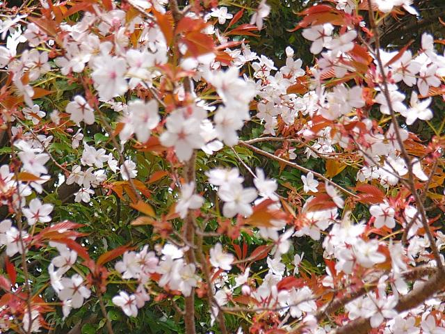 2006-Spring055.jpg