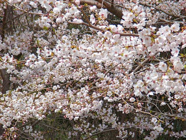2006-Spring057.jpg