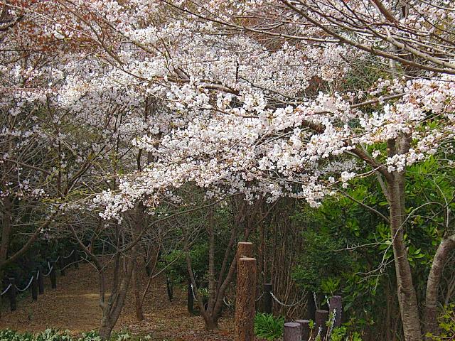 2006-Spring058.jpg