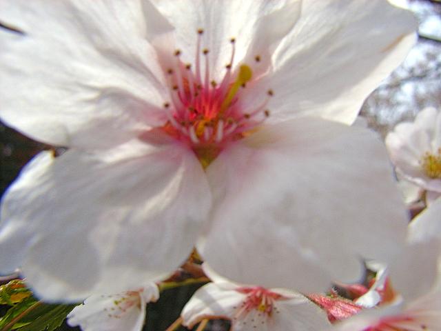 2006-Spring059.jpg