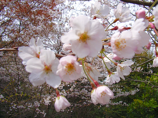 2006-Spring060.jpg