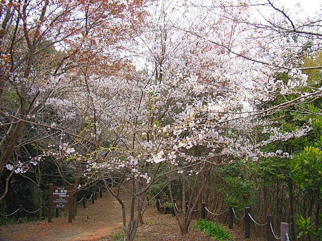 2006-Spring061.jpg