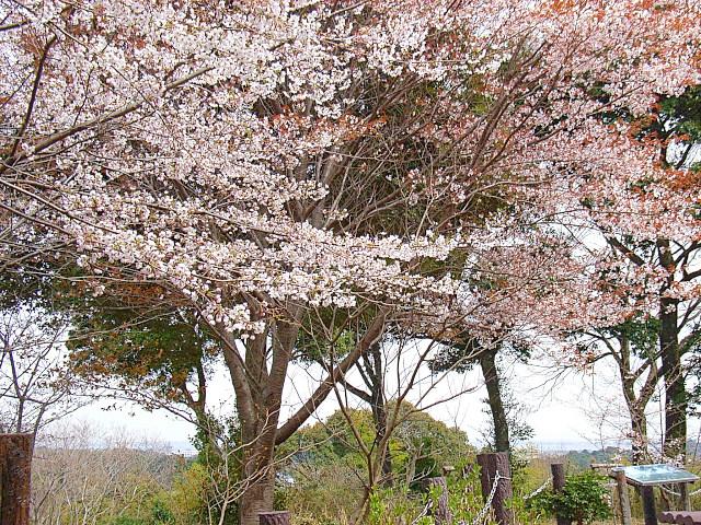 2006-Spring062.jpg