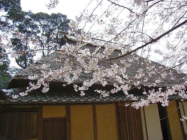2006-Spring063.jpg