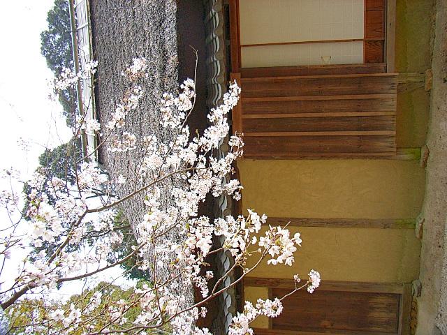 2006-Spring066.jpg