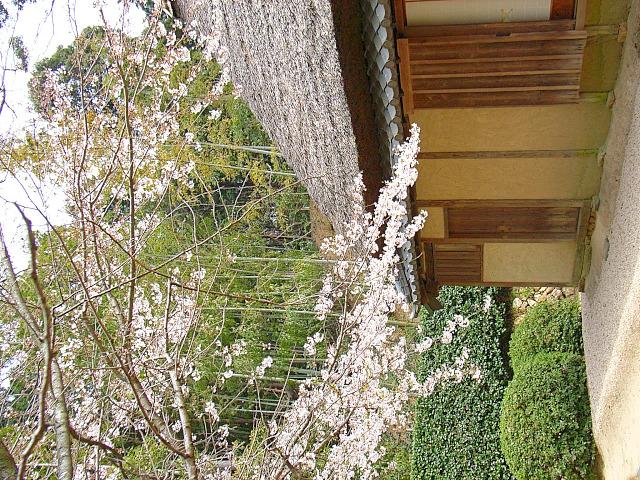 2006-Spring068.jpg