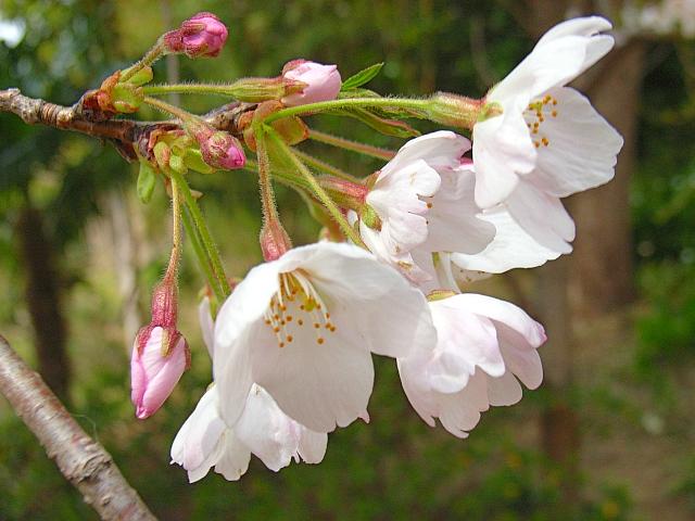 2006-Spring071.jpg