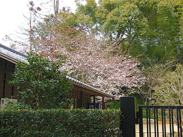 2006-Spring080.jpg