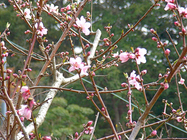 2006-Spring083.jpg