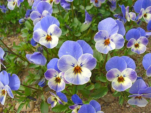 2006-Spring084.jpg