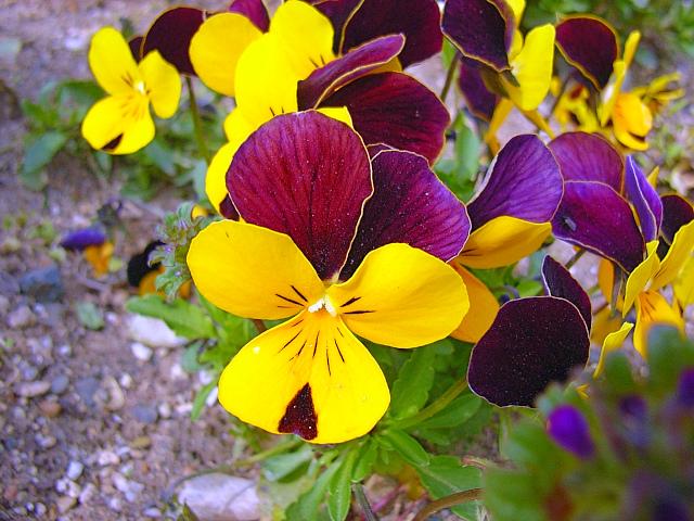 2006-Spring085.jpg