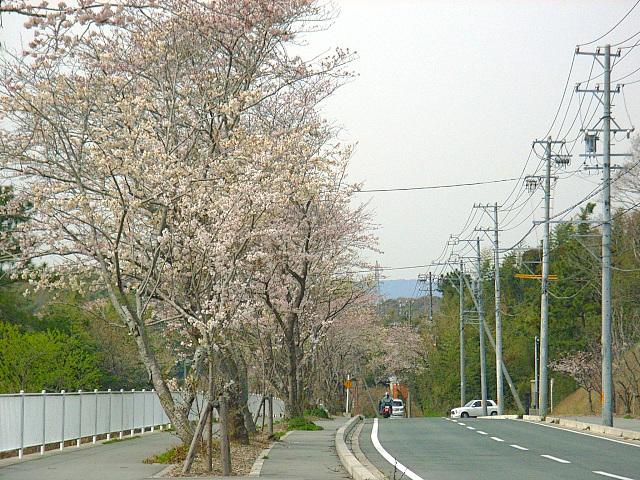 2006-Spring092.jpg