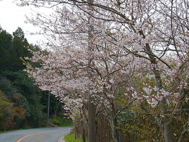 2006-Spring093.jpg