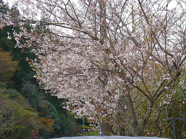 2006-Spring096.jpg